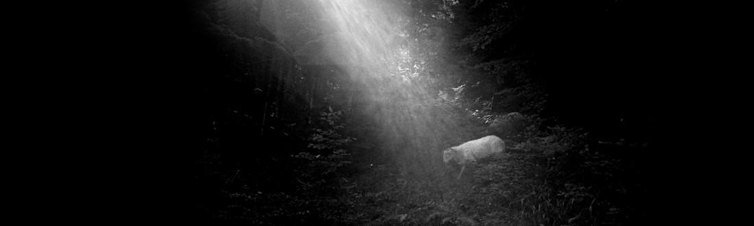 La nature de l'homme - Sylvain Ferrari